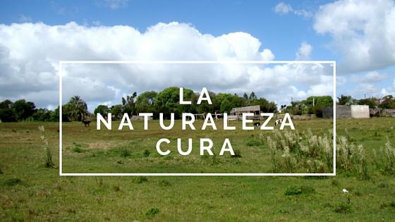 Científicamente comprobado: La naturaleza cura
